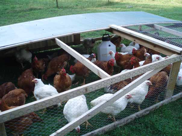 Mobile pen for pastured poultry